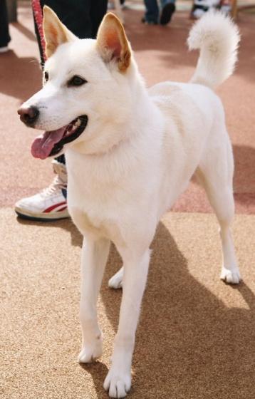 人気ブロガー犬のネジ